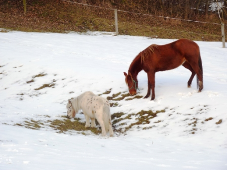 ismerkedés ló freunde)